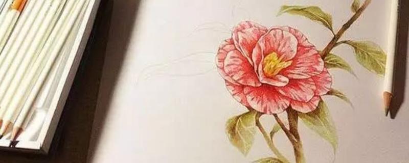 彩铅花卉教程